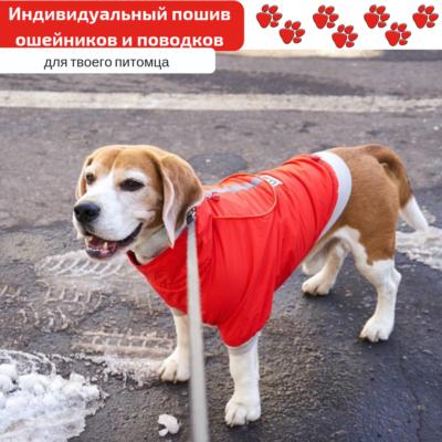 кейс продвижения в Инстаграм: одежда для животных